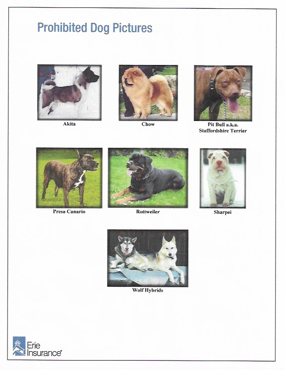 Dovetail Acres Campground Pet Policy prohibits these dog breeds from being on the grounds. The breeds include: Akita, Chow, Pit Bull, Presa Canario, Rottweiler, Sharpei, and Wolf Hybrids.